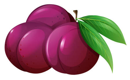 plums: Fresh plums with leaves illustration