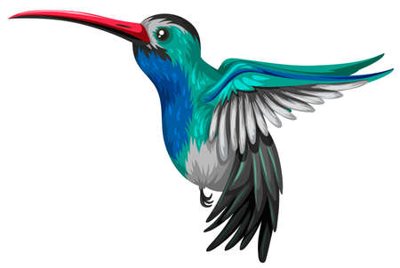 Humingbird voler sur fond blanc illustration