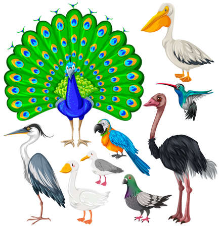 emu: Different types of wild birds illustration