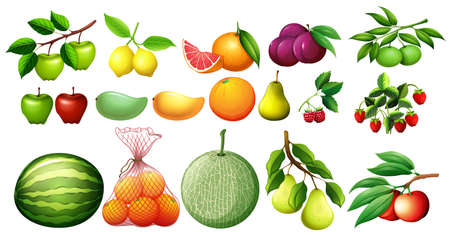rasberry: Different kind of fruits illustration
