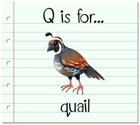 Flashcard letter Q is for quail illustration