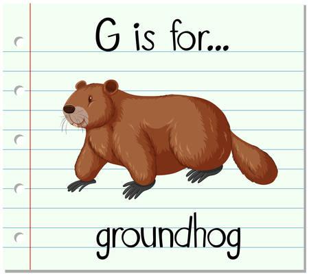 spells: Flashcard letter G is for groundhog illustration Illustration