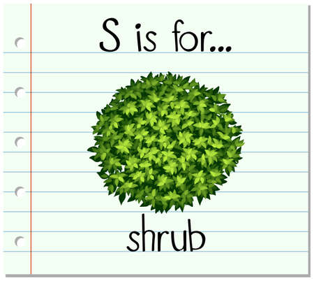 young leaves: Flashcard letter S is for shrub illustration