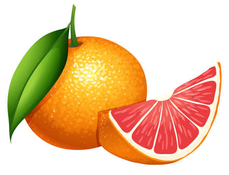 grapefruit: Fresh grapefruit on white background illustration