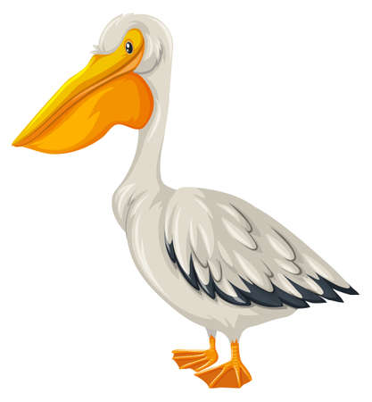 pelican: Pelican bird with white feather illustration Illustration