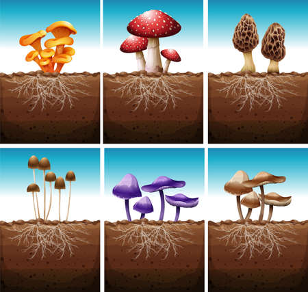 ground: Fresh mushrooms growing in the ground illustration