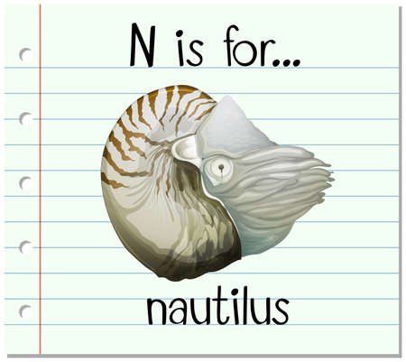 3,449 Nautilus Stock Illustrations, Cliparts And Royalty Free ...