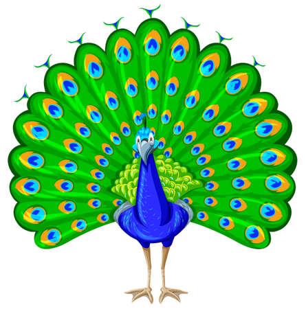 oiseau dessin: Peacock avec coloré plume illustration