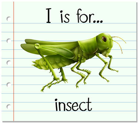 insect: Flashcard letter I is for insect illustration Illustration