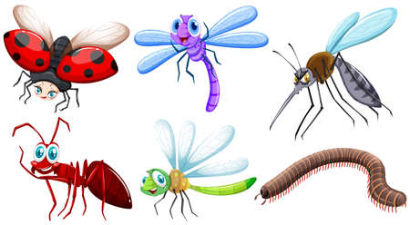 small group of objects: Different kind of insects illustration
