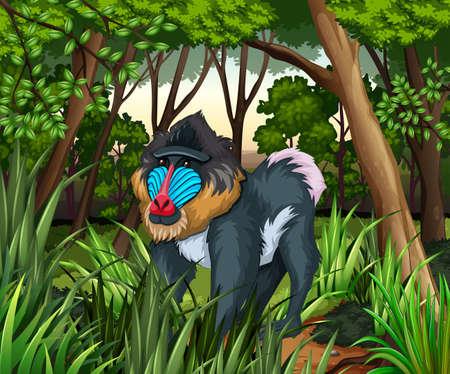baboon: Baboon living in the dark forest illustration Illustration
