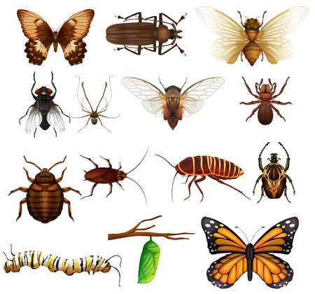 cicada: Different kind of wild insects illustration