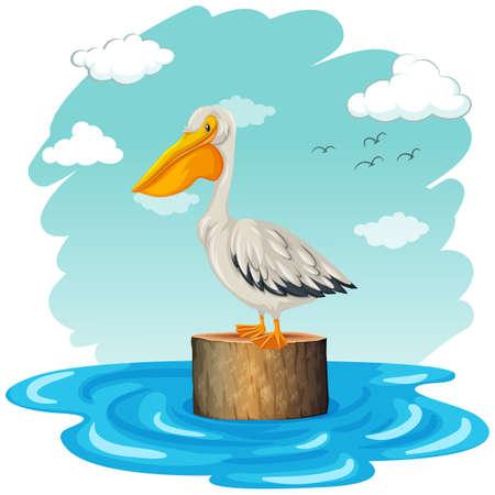 Pelican standing on log illustration