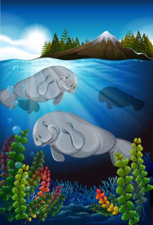 manatee: Sea cows swimming under the sea illustration Illustration