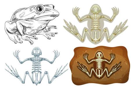 underground: Frog and fossil underground illustration