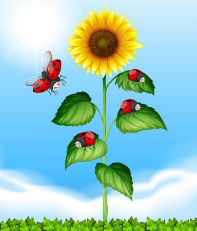 mariquitas: Mariquitas que vuelan alrededor de la ilustración de girasol