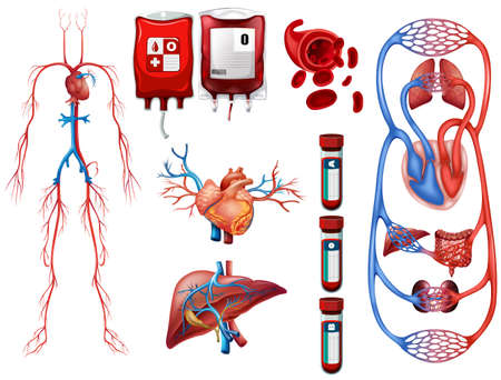 body blood: Blood types and breathing system illustration