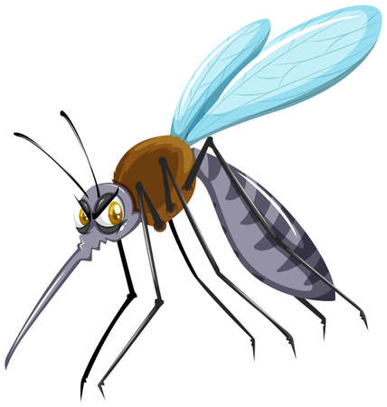 disease carrier: Wild mosquito on white background illustration