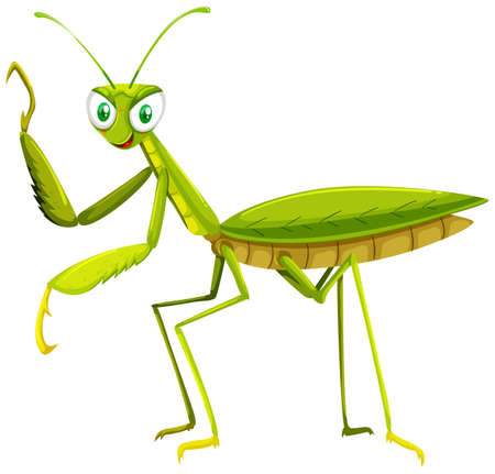 stick insect: Green grasshopper on white background illustration