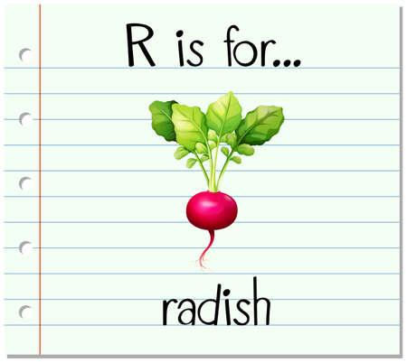 radish: Flashcard letter R is for radish illustration Illustration
