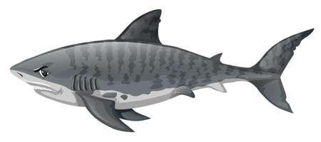 carnivorous fish: Gray shark looking angry illustration Illustration