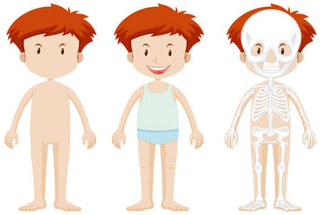 human bones: Little boy and skeleton structor illustration