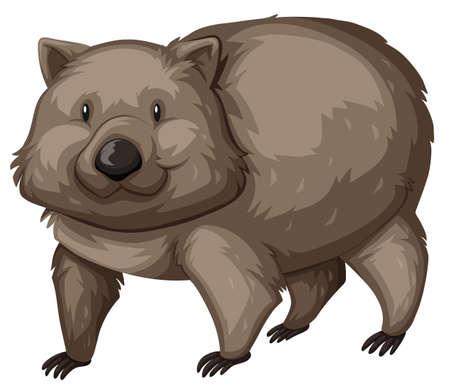 wombat: wombat salvaje en el fondo blanco Ilustración
