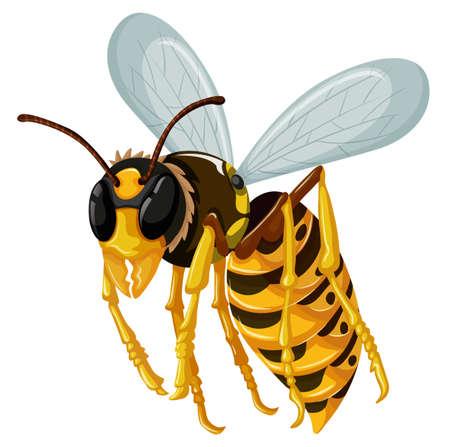 avispa: Sola avispa del vuelo en el fondo blanco ilustración Vectores