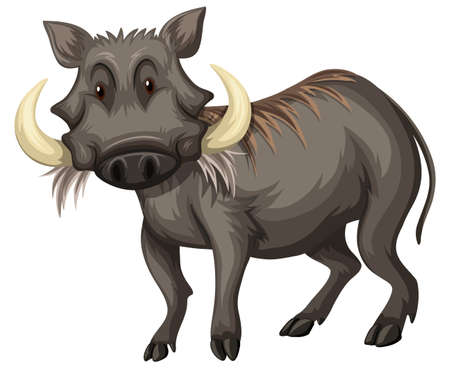jabali: Cerdo salvaje con la ilustración de dientes afilados Vectores