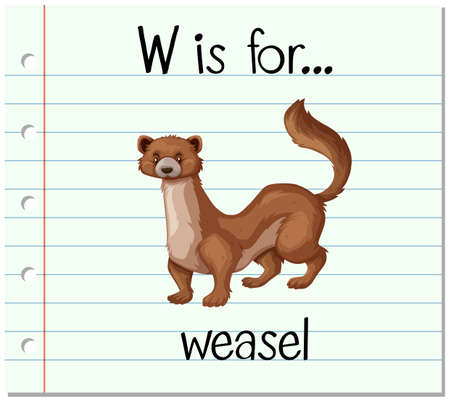 weasel: Flashcard letter W is for weasel illustration