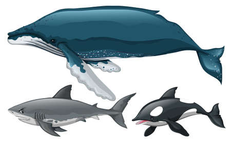 'killer whale': Different type of whale and shark illustration