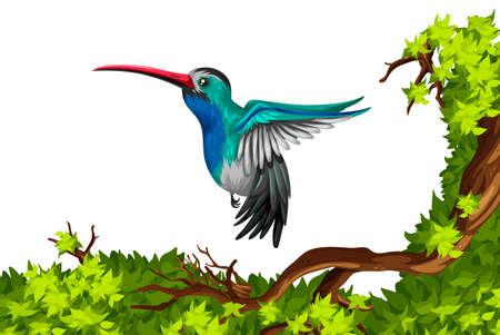 Humming vol d'oiseau sur la branche illustration