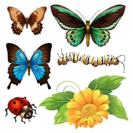 wor: Different kind of butterflies and bugs illustration