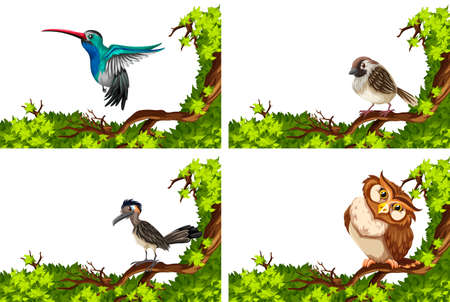 bird flying: Different wild birds on the branch illustration