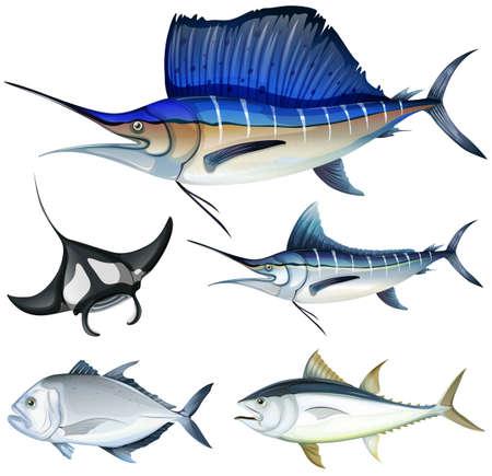 Diferentes tipos de ejemplo de los pescados