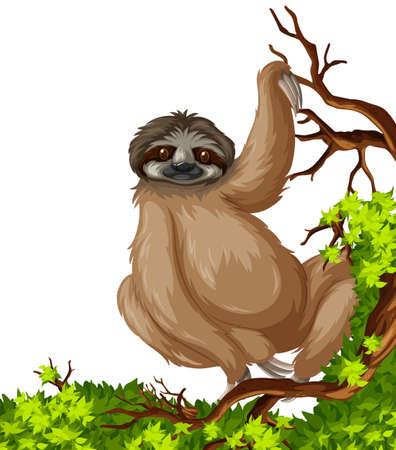 sloth: pereza linda en la ilustración de la rama