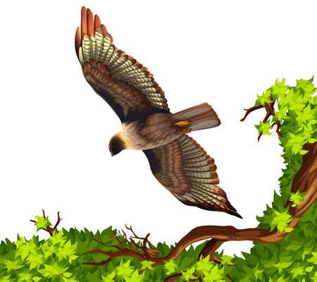 eagle flying: Eagle flying over the tree illustration