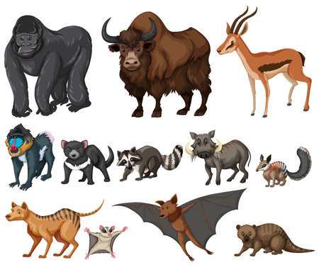 possum: Different kind of wild animals on white illustration Illustration