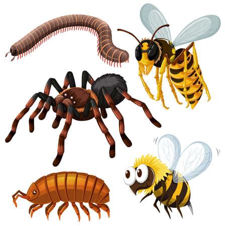 insecto: Diferentes tipos de insectos peligrosos ilustración Vectores