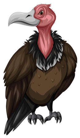 vulture: Wild vulture on white background illustration