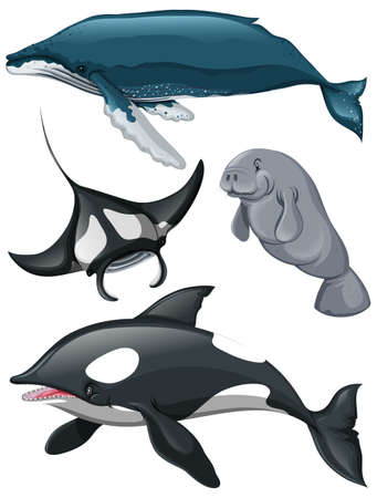 manatee: Different kind of whales and fish illustration