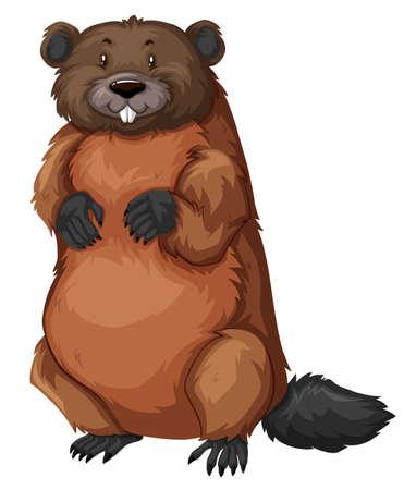 fur: Beaver with brown fur illustration