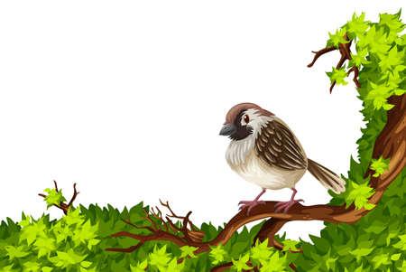 oiseau dessin: sparrow Brown sur la branche verte illustration