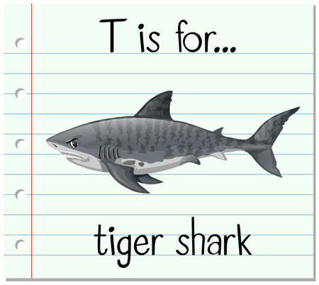 carnivorous fish: Flashcard letter T is for tiger shark illustration