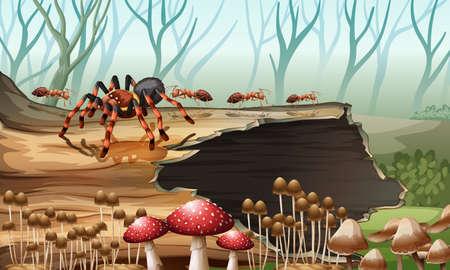 animales de la selva: Araña y hormigas en la ilustración de maderas Vectores