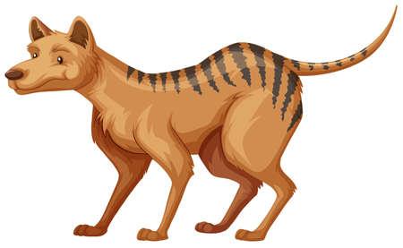 tasmanian: Tasmanian tiger on white background illustration Illustration