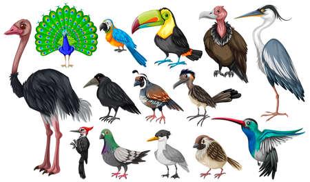 Set of wild birds illustration