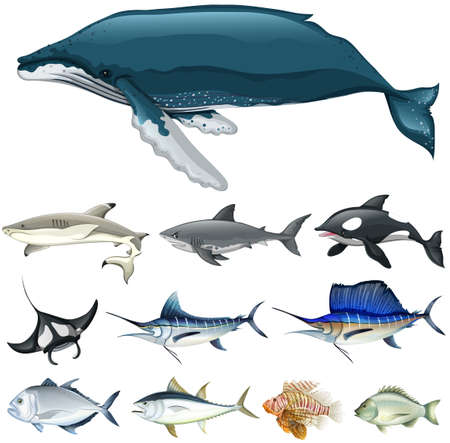 group picture: Set of fish in the ocean illustration
