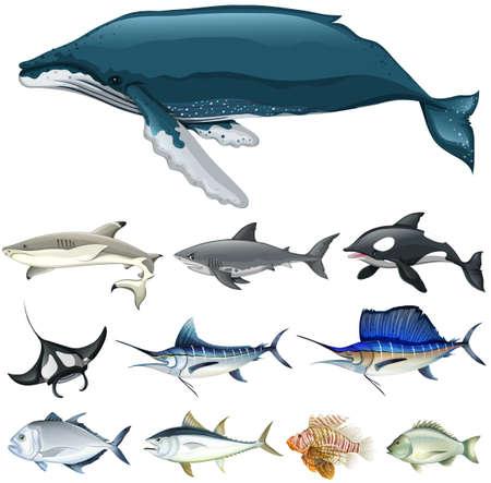 bluefin tuna: Set of fish in the ocean illustration