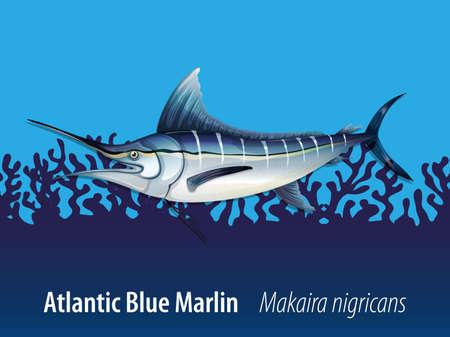 carnivorous fish: Atlantic blue marlin under the sea illustration